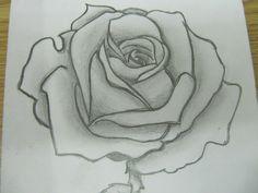 sketched rose