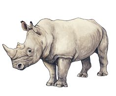 Rhino by silvercrossfox on DeviantArt Animal Drawings, My Drawings, Drawing Animals, Rhino Tattoo, Africa Drawing, Rhino Art, Save The Rhino, Baby Rhino, Tier Fotos