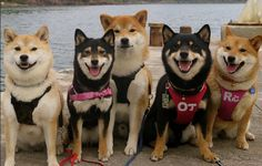 Happy Doggy Family Album Is Almost Too Friggin' Adorable To Be Real - But It Is