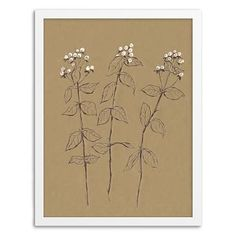 Framed Print - Berry Branches #westelm