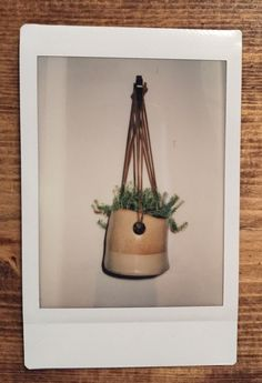 Indoor plant in a hanging pot. shot on #Instax Mini 90