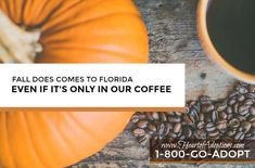 Fall in Florida. It's 100 degrees outside, but we put pumpkins under our palm trees and spice in our coffee. Adoption Quotes, Adoption Agencies, Palm Trees, Pumpkins, Spice, The Outsiders, Florida, Coffee, Fall