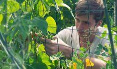 Boontjes oogsten Vegetable Garden, Garden Plants, Permaculture, Gardening Tips, Planting Flowers, Home And Garden, Fruit, Couple Photos, Outdoor