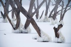 Photo Of The Day: Ice Age - A Beautiful View of Frozen Trees - SparkyHub