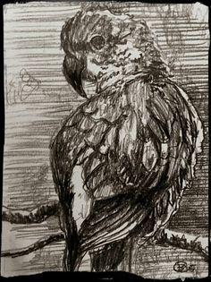 Bird sketch one