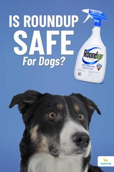 Environmental Issues, Dog, Pets, Health, Animals, Diy Dog, Animales, Health Care, Animaux
