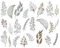 Foliage in watercolor and ink by Watercolor_Vector Graphic on @creativemarket