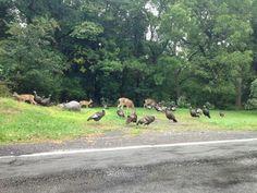 Irondequoit: where deer and wild turkeys meet.