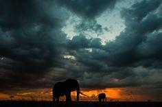 Maasai Mara 6_ Paul Goldstein