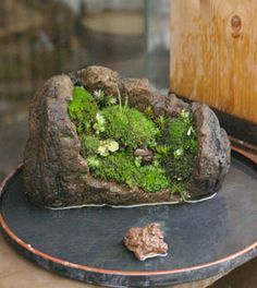 Moss BONSAI 苔盆栽 a mountain grove in suiban w/ water