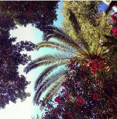 Palms Natureart Naturelove Sky Nature Reisen