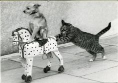 Vintage photo, cat pushing a small dog on a toy horse. Nothing to see here, folks.