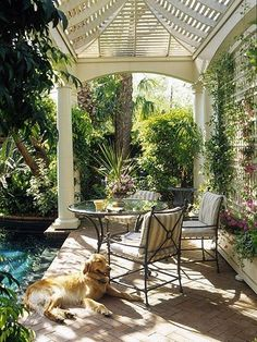 love the trellis by the pool.  Puppy looks so relaxed ( I would be too )