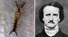 18 Face Of Edgar Allan Poe Appears On A Caterpillar