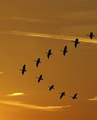 Magnetic orientation in migrating birds / Special News Data Migration, Bird Migration, Birds, Autumn, News, Nature, Prints, Beauty, Naturaleza