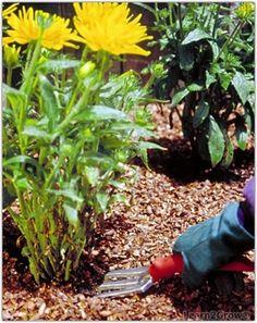 Mulching Perennials - Step 3