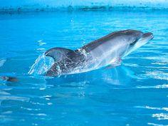 uShaka Marine World South Africa, Whale, Cool Stuff, Animals, Whales, Animales, Animaux, Animal, Animais