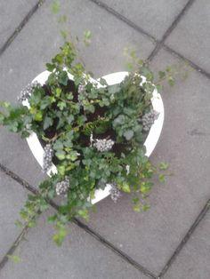 Planten in een hart (soort letterbak met verschillende vakken).