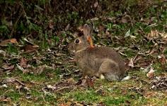 Hallo sprach heut der Osterhase, …  sucht euer Nest jetzt hier im Grase, bei blauem Himmel und auch Sonne, ist Eierlegen eine Wonne. Nein nein, das ist kein Hasenlatein, es dürft nur etwas wärmer sein. Frohe Ostern !