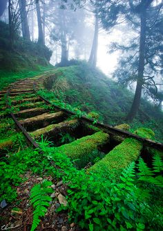""""""" Overgrown railway tracks in forest ~ Jiancing Historic Trail, Taipingshan National Forest ~ Taiwan. """" """" Overgrown railway tracks in forest ~ Jiancing Historic Trail, Taipingshan National Forest ~ Taiwan. Beautiful World, Beautiful Places, Beautiful Pictures, Amazing Photos, Beautiful Forest, Beautiful Dream, Beautiful Scenery, Stunning View, Train Tracks"""