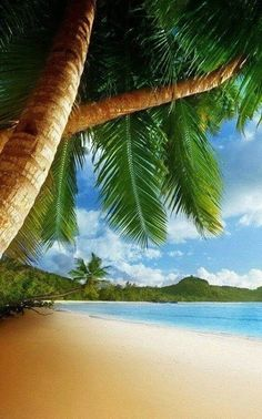 Tropical beach - live wallpapers for all those who emotion season, cheerful beaches and foreign points! Many palm-trees and tender movements will be an incredible background for your desktop. Beach Images, Beach Pictures, Summer Pictures, Photos Voyages, Tropical Beaches, Live Wallpapers, Latest Wallpapers, Tropical Paradise, Belle Photo