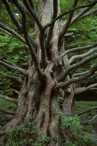 looks like and evil tree
