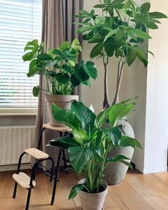 Image may contain: plant and indoor House Plants, Green Interiors, Future House, House, House In Nature, House Styles, Monstera Deliciosa, Monstera, Indoor
