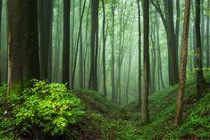 zzzze — the-elemental-witch:   Wald #59 by HeikoGerlicher