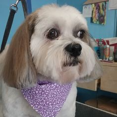 Molly #wagsmytail #tucsondoggrooming #doggrooming A well groomed dog is a well loved dog! Call us today to schedule your dog grooming appointment 520-744-7040