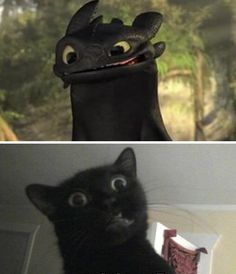 haha watching Toothless always reminds me of my black kitty