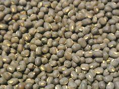 Bean, Kali Black Gram (Organic)