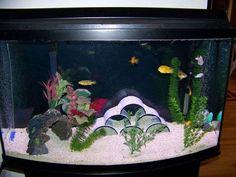 Freshwater Aquarium Fish, Aquarium Fish Tank, Planted Aquarium, Fishing For Beginners, Fish For Sale, Dog Health Care, Aquarium Decorations, Bird Illustration, Amphibians