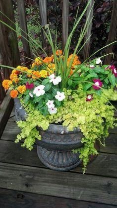 Jessica's container garden