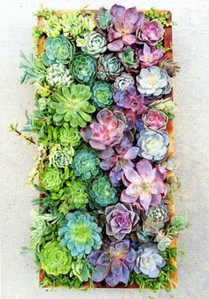 Currently crushing on succulents.