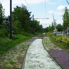 Tram line from Bron to Eurexpo – Lyon (France)   Ilex Paysages & Urbanisme