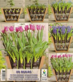 bulb planting for 2 months of flowers in one container