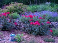 Rose garden allentown pa allentown pinterest gardens roses - Plant Combos I Love On Pinterest Grasses Forests And