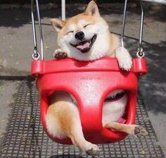 Genios del Photoshop crean ingeniosas versiones de este tierno perrito en un columpio