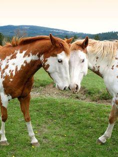 Horse love.