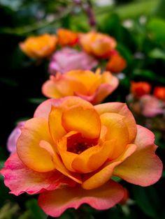 ~~Roses~~