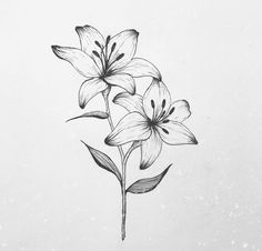Lilies Drawing, Floral Drawing, Lirio Tattoo, Lily Flower Tattoos, Dibujos Tattoo, Lily Painting, Flower Sketches, Minimal Tattoo, Flower Art
