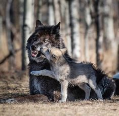 51 Mejores Imágenes De Cachorros De Lobo Drawings Mythological