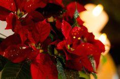 Adventsstern. Foto: CookImage.de #christmas #xmas #weihnachten #weihnachtsbaum #leipzig #deutschland