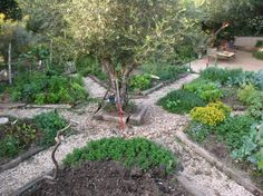 Stacey's vegetable garden Israel – My vegetable garden is made up of six triangles in the shape of a mandala with an olive tree in the middle and a seat around. My sanctuary… Container Gardening Vegetables, Planting Vegetables, Potager Garden, Garden Landscaping, Permaculture, Gemüseanbau In Kübeln, Forest Garden, Mandala, Vegetable Garden Design