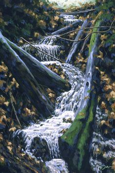 Falling Water, Madrone Canyon, Larkspur, #California The winter rains are in full flush, and the dry creek of summer has been filled with rushing water. Fallen trees and drenched leaves open a zigzag path. Enjoy!