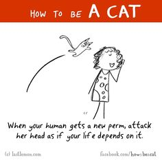 How to be a cat #how2beacat