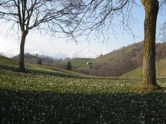 #PizzoCasnigo #spring #crocus #nature #fagetum #casnigo #pizzo