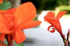 #naturephotography #orangeflowers #flowers #kaitlynvictoriaphotography