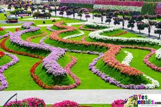 The most beautiful and biggest natural flower garden in the world, Dubai Miracle Garden The Miracle Garden contains special vertical and horizontal landscaping designs, each area has special design