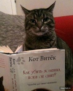 Кот витек / АйДаПрикол :)